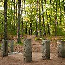 Site of Thoreau's Cabin by Sam Scholes