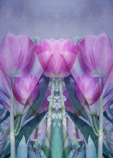 ThE StRaNgE TuLiP WorLd by ©Maria Medeiros