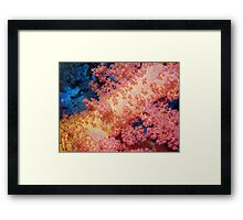 Close up of Pink & Yellow Soft Coral Framed Print