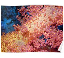Close up of Pink & Yellow Soft Coral Poster
