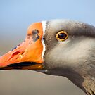 Goose Portrait by Randall Ingalls