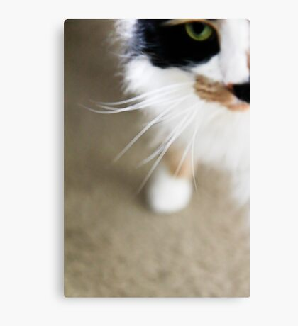 Oh Hai there Canvas Print