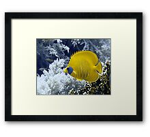 Butterfly Fish Over Fire Coral Framed Print