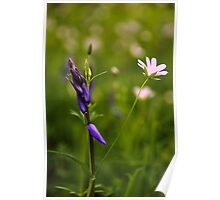 Woodland Flowers Poster