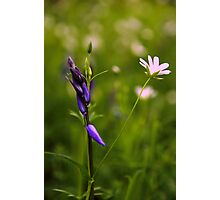 Woodland Flowers Photographic Print