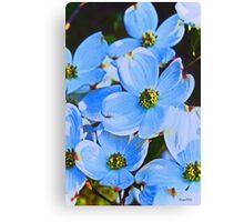 Blue Dogwood Canvas Print