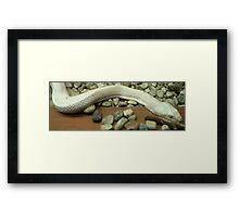 Slither... Framed Print