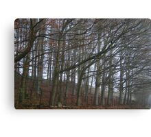 The sleeping trees of Winter Canvas Print