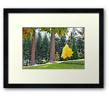 Queenstown Gardens Framed Print
