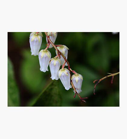 Small Bells Photographic Print