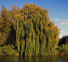 Weeping Willow Tree by the canal by JHMimaging