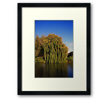 Weeping Willow Tree by the canal Framed Print