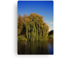Weeping Willow Tree by the canal Canvas Print