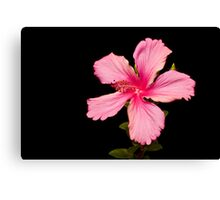 Black and Pink Hibiscus Canvas Print