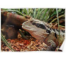 Reptilian Poster