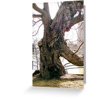 Willow tree on the banks of the Rideau River, Ottawa Greeting Card