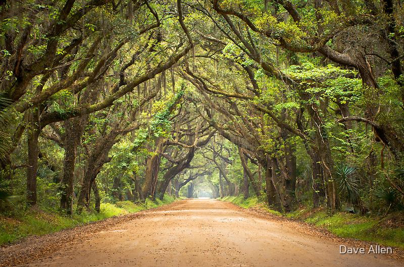 Botany Bay Road - Edisto Island, SC by Dave Allen