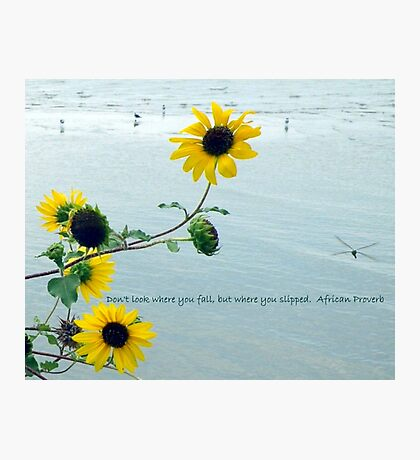 Sunflower And A Proverb Photographic Print