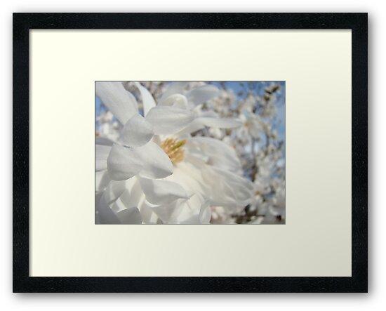 White Floral art Magnolia Flowers Landscape Blue Sky Baslee Troutman by BasleeArtPrints