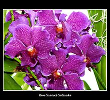 Purple Orchids by Rose Santuci-Sofranko