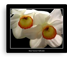 White Jonquils/Daffodils Canvas Print