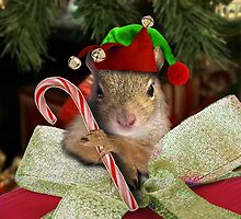 Christmas Elf Squirrel by jkartlife