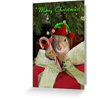 Christmas Elf Squirrel Greeting Card