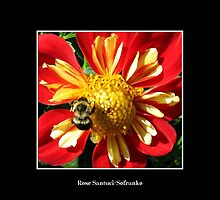 Bee on Red Flower by Rose Santuci-Sofranko