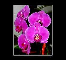 Purple Orchids #2 by Rose Santuci-Sofranko
