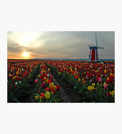My Touch Of Holland Photographic Print