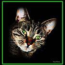My Whitney Kitty by AngieBanta