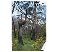 Whipstick Trees Poster