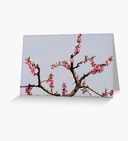 peach trees Greeting Card