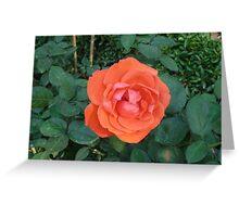 brilliant red rose Greeting Card