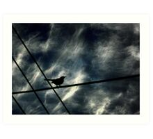 Where To Fly? Art Print