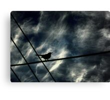 Where To Fly? Canvas Print