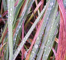 Dewy Grass by Bridget Rust