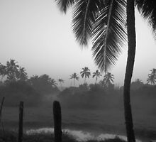 Palm by Bridget Rust