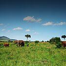 Maasai Mara - Kenya by Pascal Lee (LIPF)