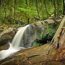 Autumn Afternoon at Olinda Falls by Jason Green