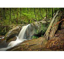 Autumn Afternoon at Olinda Falls Photographic Print