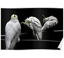 Cockatoo Party 3 Poster