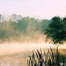 Morning Fog by goldnzrule
