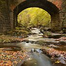 Bridge over May Beck by MartinWilliams