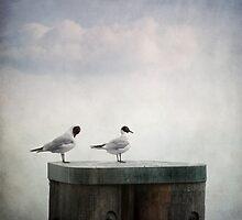 Seagulls by Priska Wettstein