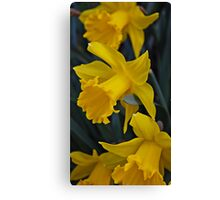 The Yelow of Spring Canvas Print