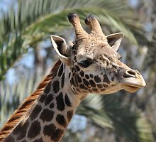 Giraffe by Christian Eccleston