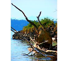 Northwest Roots  Photographic Print