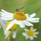 Flowers by Lifeware