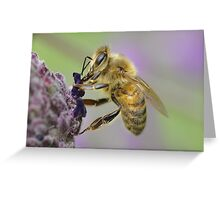 Bee-lated Birthday Card Greeting Card